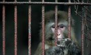 Vườn thú '1 người' buộc đóng cửa do cơ sở vật chất tồi tàn