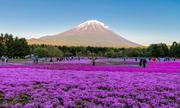 Khám phá cung đường 'rồng bay Shoryudo' ở Nhật Bản
