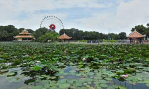 Đại gia xếp hàng mua cổ phần doanh nghiệp sở hữu Công viên Đầm Sen