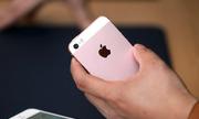 Nhiều cửa hàng nhận đặt iPhone SE, giá từ 10,5 triệu đồng