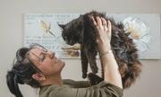 Tìm lại mèo cưng thất lạc 11 năm nhờ Facebook