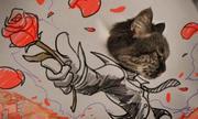 Mèo hóa thân hài hước