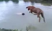 Chó nhảy xuống nước cứu chủ