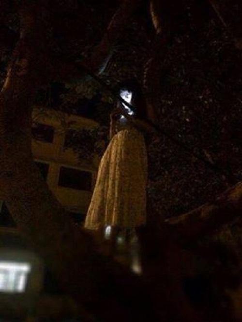 Khiến người khác hoảng sợ khi nửa đêm leo cây bắt wifi cho mát.