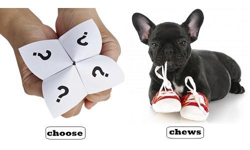 ban-co-biet-choose-va-chews-phat-am-giong-nhau