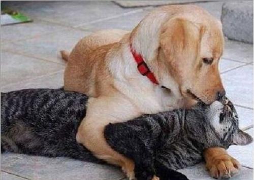 Tình yêu vượt qua mọi ranh giới.