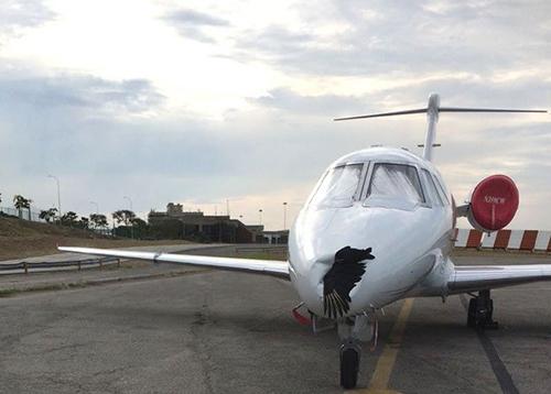 Chiếc Cessna 650 bị móp mũi còn con chim đã chết thảm sau vụ va chạm. Ảnh: Twitter