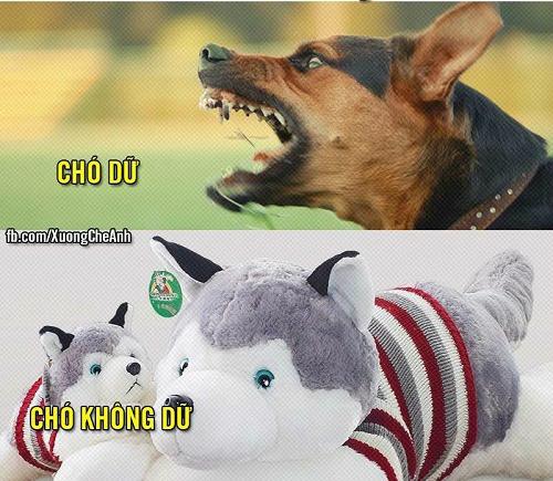Cách phân biệt chó dữ và chó không dữ.