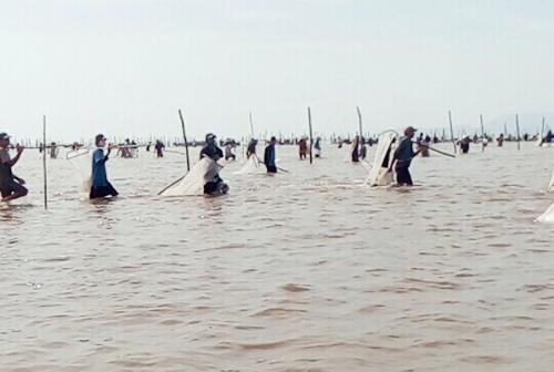 Hàng nghìn người kéo về dùng vợt, máy hút khai thác nghêu nuôi của Hợp tác xã nghêu Đất Mũi. Ảnh: Phúc Hưng