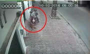 Trộm kéo lê chó Phú Quốc chục triệu đồng giữa phố Hà Nội