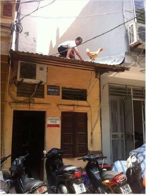 Lên nóc nhà bắt con gà.