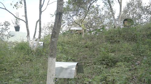 Mô hình nuôi ong rừng tự nhiên trong rừng, không cho ong ăn đường của người dân Quản Bạ. Ảnh: bizmedia