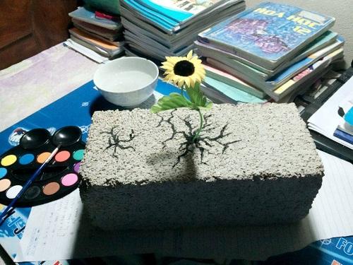 Hoa nở trên đá.