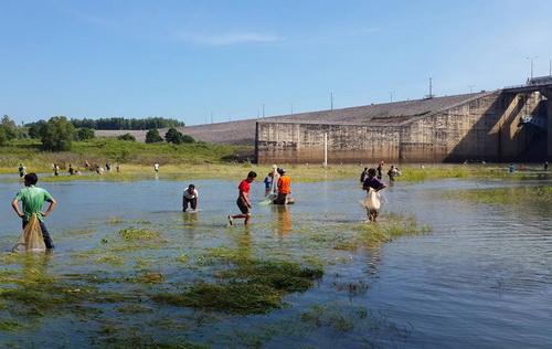 Hàng trăm người xuống khu vực lòng đập hồ Trị An rộng chừng 10002 để bắt cá. Ảnh: Thái Hà