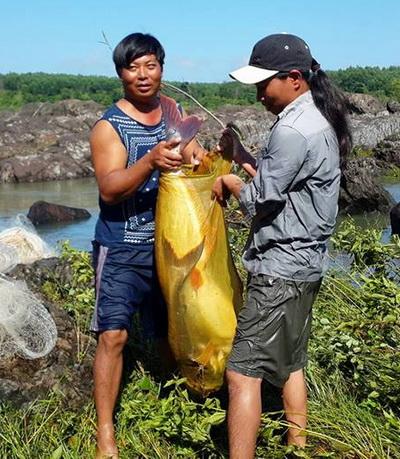 Nhiều con cá khủng được bắt đưa về nhà. Ảnh: Thái Hà
