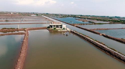 Mô hình nuôi và sản xuất cá bống bớp rộng trên 1.000 m2 do anh Sơn đầu tư. Ảnh: bizmedia