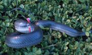 Câu cá, bắt rắn trên dòng kênh chết Sài Gòn