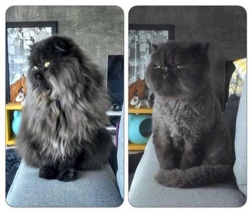 Trước và sau khi được cắt tóc.