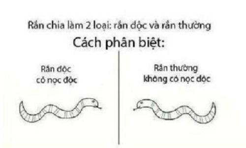 Cách phân biệt rắn độc và rắn thường.