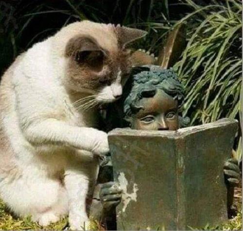 Chăm chỉ đọc sách mở mang tri thức.