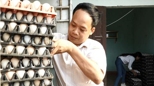 Mỗi ngày, từ Vĩnh Phúc, hàng vạn quả trứng gà sạch theo chân các thương lái đi khắp thị trường các tỉnh phía Bắc như Hà Nội, Thái Nguyên, Hải Phòng&. Ảnh: BizMedia