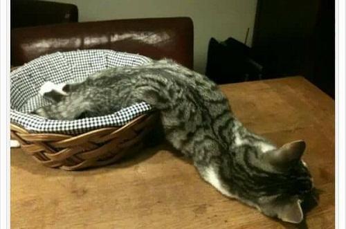 Mèo là một loại chất lỏng.