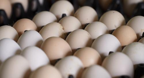 Trứng gà Ai Cập có hình dáng, kích thước tương đương trứng gà ta, chất lượng trứng ổn định với tỷ lệ lòng đỏ cao, đặc và đã được người tiêu dùng đón nhận. Ảnh: BizMedia