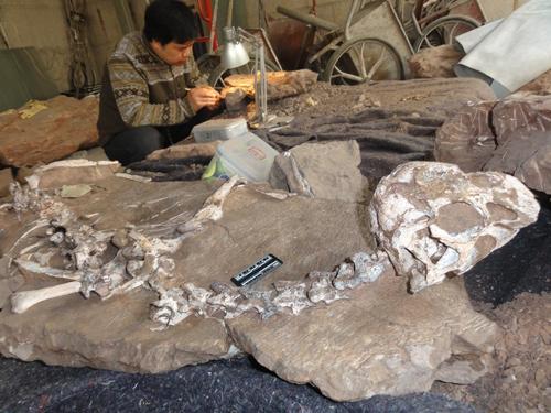 Các chuyên gia nghiên cứu hóa thạch con khủng long. Ảnh: Junchang Lu