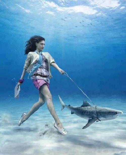 Dắt cá mập đi dạo.