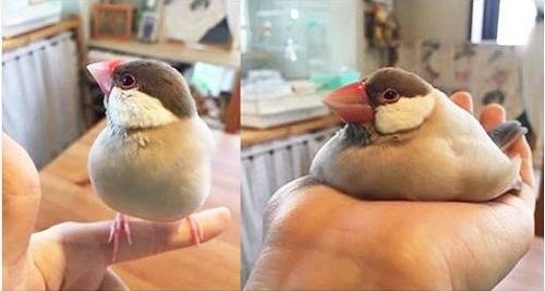 Sự khác biệt khi người béo đứng và ngồi.