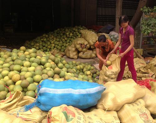 Người dân mua bán bưởi ở Bằng Luân. Ảnh: phutho.gov