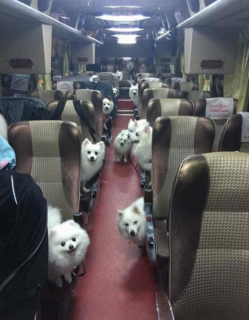 Chuyến xe thú cưng.