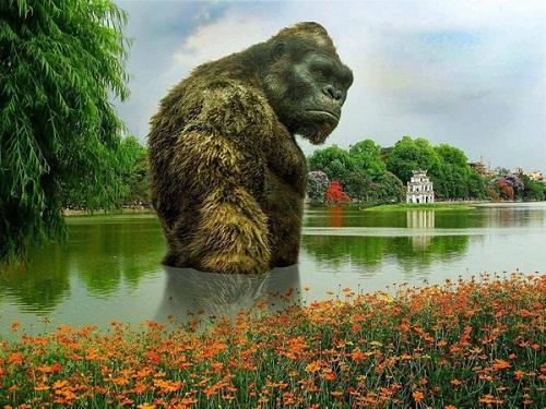 Kong trầm lặng ở Hồ Gươm.