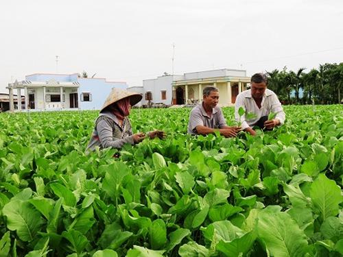 Kết quả hình ảnh cho Thu hơn 5 tỷ đồng từ 800 tấn rau VietGAP mỗi năm