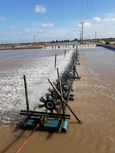 Ao nuôi cá chẽm tại Sóc Trăng. Ảnh: Thủy sản Ngọc Hường.
