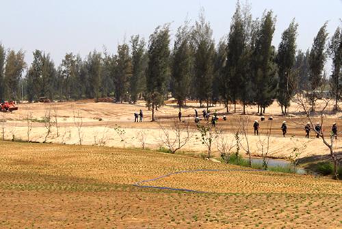 Phú Yên cho đốn hơn 100 hecta rừng làm sân golf
