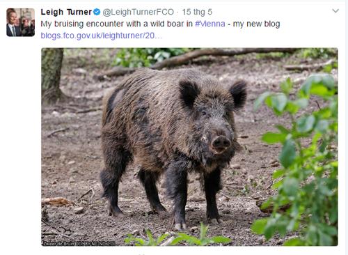 Đại sứ Anh tại Áo Leigh Turner tweet về cuộc chạm trán với lợn rừng. Ảnh chụp màn hình: Twitter.