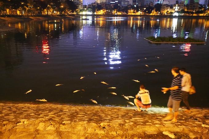 Cá chết la liệt trên mặt hồ Hoàng Cầu