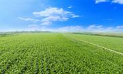 'Chìa khóa' phát triển nông nghiệp hiện đại của TH true Milk