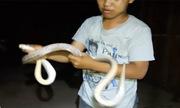 Bẫy được rắn rồng dài 2 mét ở Sài Gòn