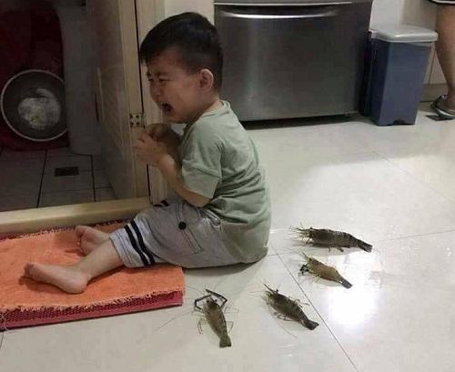 Cậu bé khóc thét vì bị tôm bao vây.