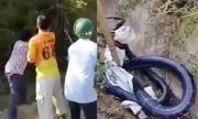 Video dân vây bắt hổ mang chúa 7 kg xem nhiều tuần qua